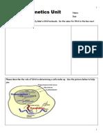 dna and genetics homework