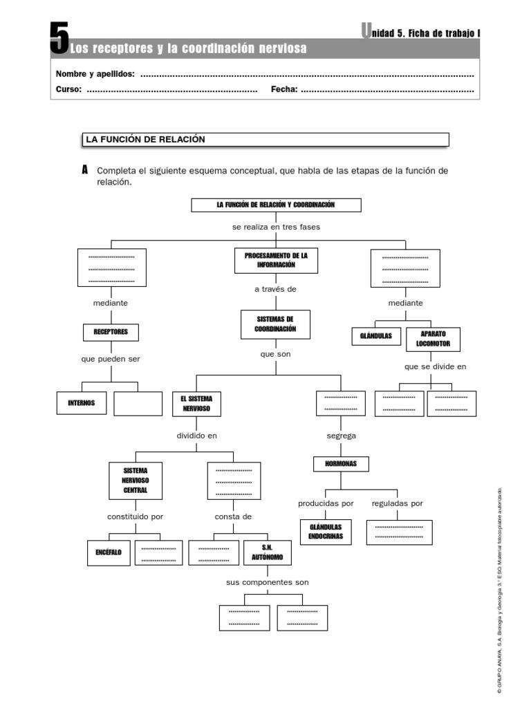 Ficha Sistema Nervioso 1