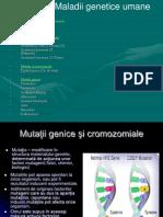 Clasa 9 Genetica