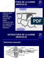 02 Estructura de La Carne