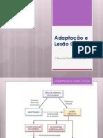 Adaptação e Lesão Celular 2013_20130224141344