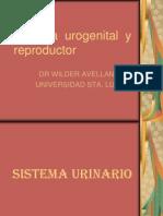 6Anato Sistema Urogenital y Reproductor