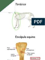 Resumen Huesos Caballo