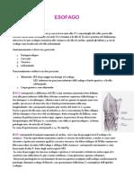 Fisiopatologia chirurgica dell' Esofago
