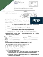 Prueba diagnóstico 5º 2013