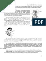 Urinary System Anatomy and Physiology | Kidney | Urinary Bladder