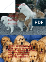 Obstetricia En Todos Los Animales..ppt