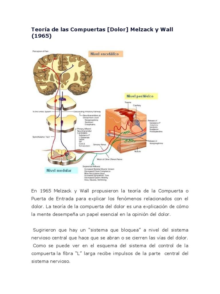 Fantástico Puerta De La Anatomía De Bloqueo Colección de Imágenes ...