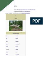 Ovis Orientalis Aries