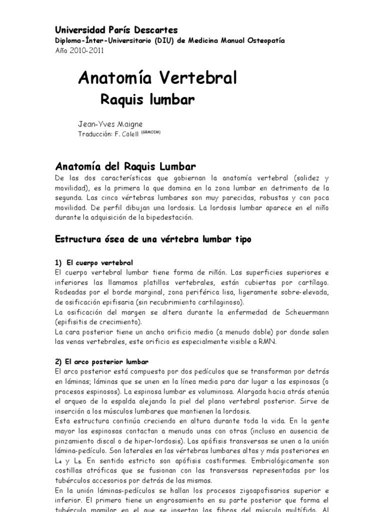 Anatomia Lumbar