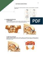 8.Sistema Endocrino