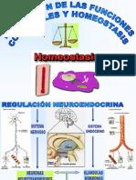 homeostasis.ppt