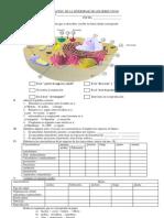 EVALUACION DE CTA  1° celula COLOR.pdf