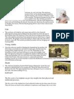 Ciclo de Vida Oso Elefante y Pato