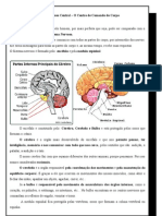T2 Sistema Nervoso