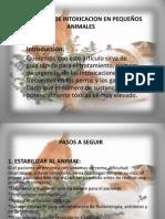 Protocolo De Intoxicaciones En Pequeños Animales..ppt