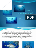 sharks friends or foes2