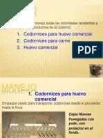 Manejo De Codornices..ppsx