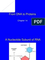DNA to Proteins