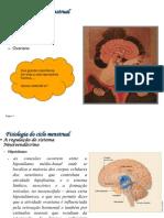 fisiologiaciclomenstrual-