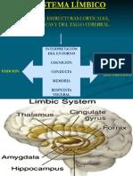 9 Sistema límbico. Ventriculos y líquido céfalo raquídeo
