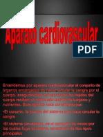 Clase 5 anatomía Aparato cardiovascular