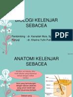 BIOLOGI KELENJAR SEBACEA