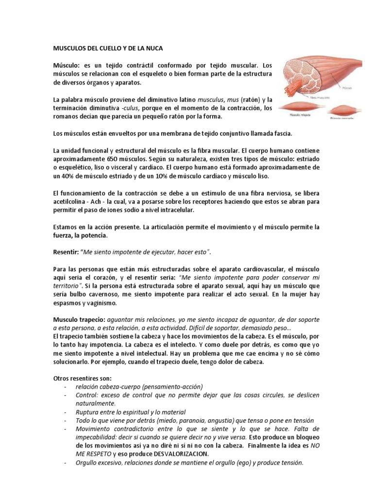 Músculos de Cuello y nuca. Significado Biodescodificación