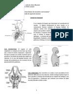 Guía Aparato fonador, técnica vocal y clasificación de las voces.