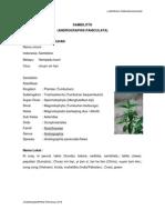 30220959 Laporan Praktikum Farmakognosi Andrographidis Herba
