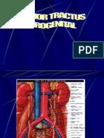 Tumor Traktus Urogenital