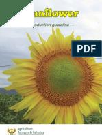 Prod Guide Sunflower