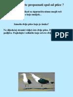 Kako Prepoznati Zensku Pticu