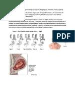 Casos Clinicos Embriologia Digestivo