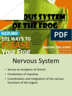 Nervous System of the Frog