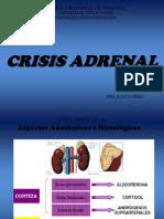 Crisis Adrenal