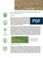 Fact Sheet Wheat