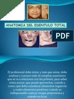 Unidad II Parte 1 Anatomia EDENTADO
