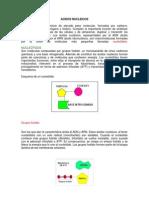 Acidos Nucleicos - Iris Panduro