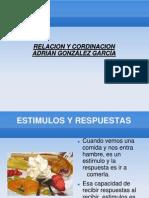 relacion y coordinacion (1) por Adrián Gozález
