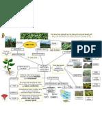 Mapa Conceptual Les Plantes