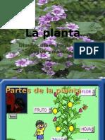 la planta 2