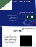 Clase Sistemas Cuerpo Humano