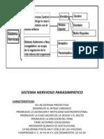 Clases de Anatom SN_Autonomo Estu 7