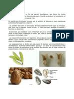 Angiospermas.docx
