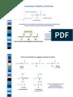 Teoria Proteinas