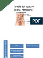 Semiología del aparato urogenital masculino (2)