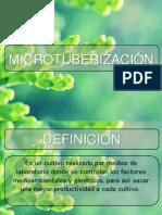MICROTUBERIZACIÒN