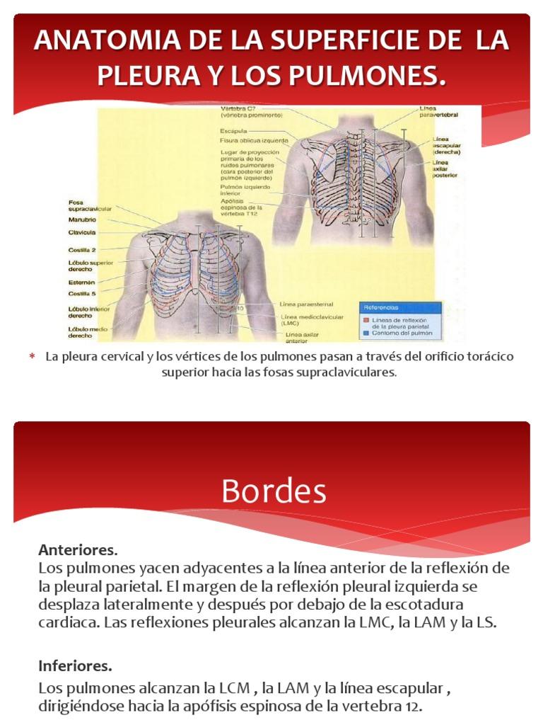 Musculos Del Torax- Pulmones, Pleura, Mediastino
