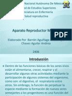 Aparato Reproductor M